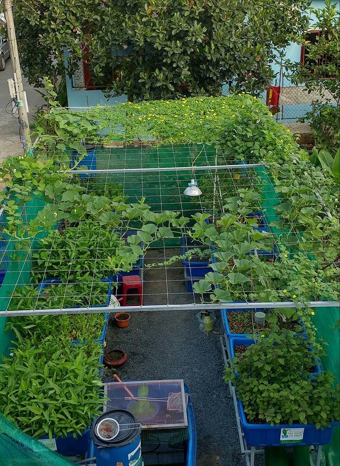 Vườn rau sạch và giàn leo tươi xanh của hệ thống Aquaponics tại nhà3