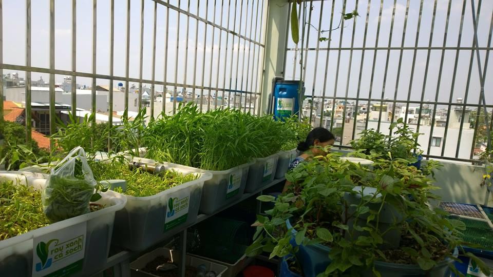 Vườn rau xanh sạch trên không giữa thành phố nhộn nhịp3