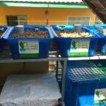 Giàn trồng rau hữu cơ Aquaponics hệ mini trên sân thượng