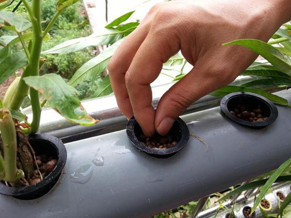Phương pháp trồng rau thủy canh tại nhà10