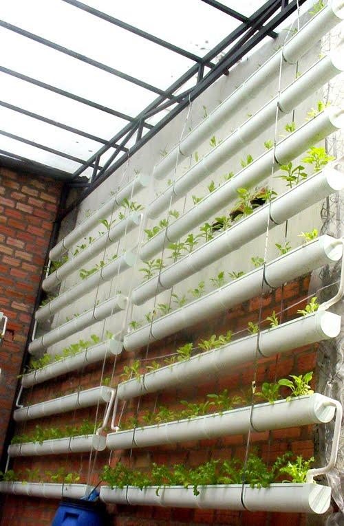 Phương pháp trồng rau thủy canh tại nhà4