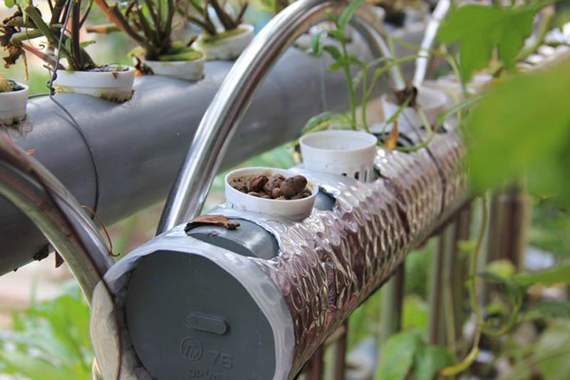 Phương pháp trồng rau thủy canh tại nhà9