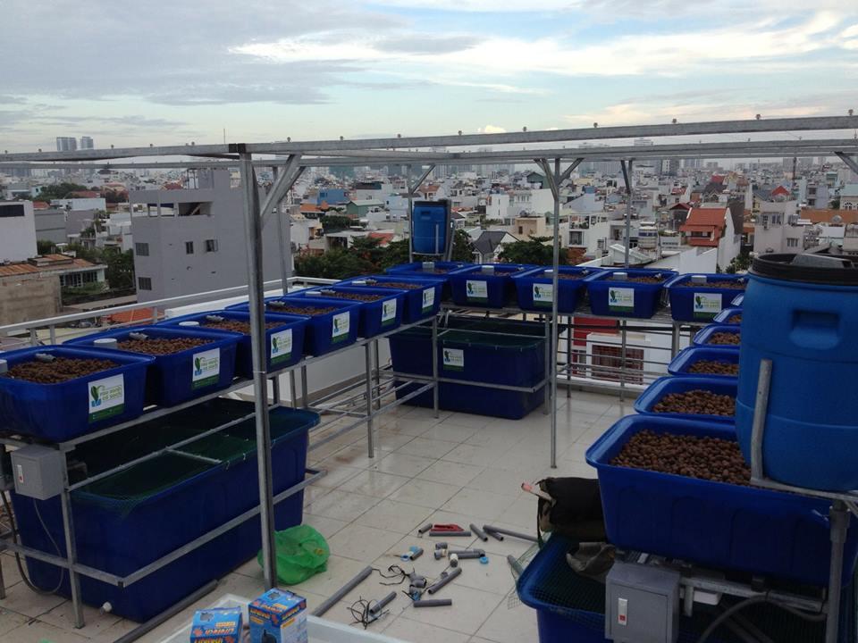 Sự kết hợp của nuôi trồng thủy sản và thủy canh là Aquaponics2