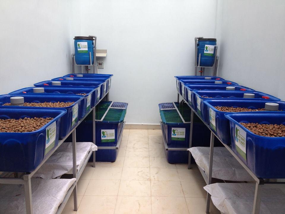 Trồng rau Aquaponics hơn trồng rau thủy canh như thế nào