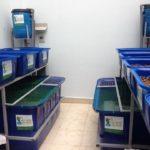 Trồng rau Aquaponics hơn trồng rau thủy canh như thế nào?