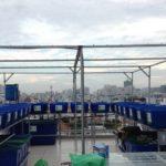 Hệ 3 giàn RXCS Aquaponics 18 khay rau 100L và 3 bồn cá 750L