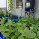 Mách bạn cách trồng rau sạch trên sân thượng