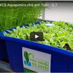 [Video cận cảnh] hệ RXCS Aquaponics khủng 31 khay rau 100L