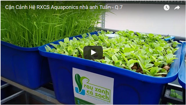 Video-Can-Canh-he-aquaponics
