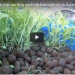 Mô hình trồng rau thủy canh kết hợp nuôi cá