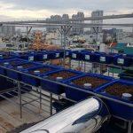 Dịch vụ trồng rau trên sân thượng, ban công nhà phố