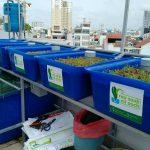 Hệ tự trồng rau hữu cơ thủy canh trên sân thượng, nhà phố, chung cư
