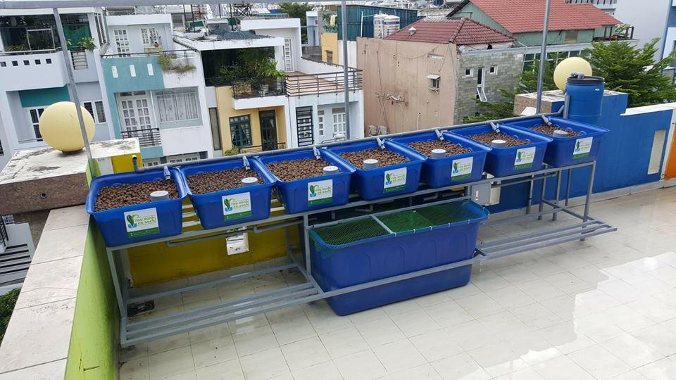 Tại sao nên lắp đặt hệ thống trồng rau sạch trên sân thượng nhà phố2