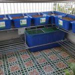 Hệ thống trồng rau sạch trên ban công, sân thượng ở nhà phố