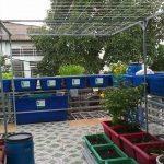 Hệ Aquaponics 13 khay rau 100L + 2 hồ cá 750L