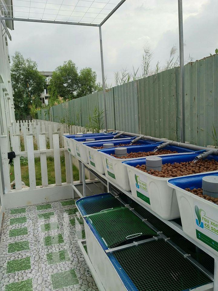 he-aquaponics-7-khay-rau-100l-tai-kdc-park-riverside-q9-3