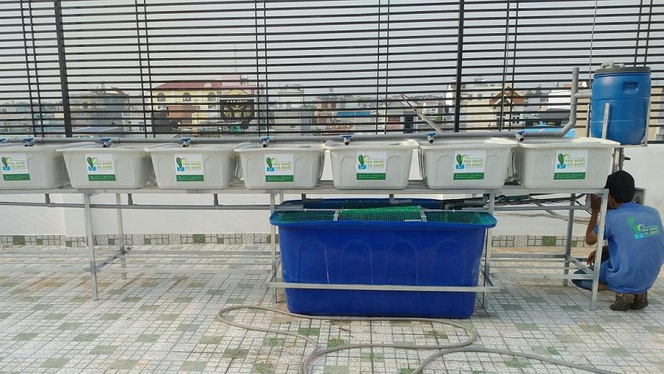 he-aquaponics-khay-da-hoa-cuong-1