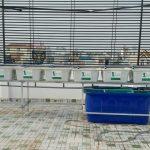 Hệ Rau Xanh Cá Sạch Aquaponics giả đá Hoa Cương!