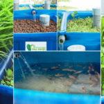 Tự trồng thủy canh tại nhà chưa chắc có rau ăn!