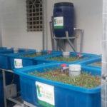 Chu trình hoạt động hệ Rau Xanh Cá Sạch Aquaponics
