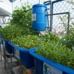 RXCS – Hệ thống trồng cây nuôi cá theo mô hình Aquaponics
