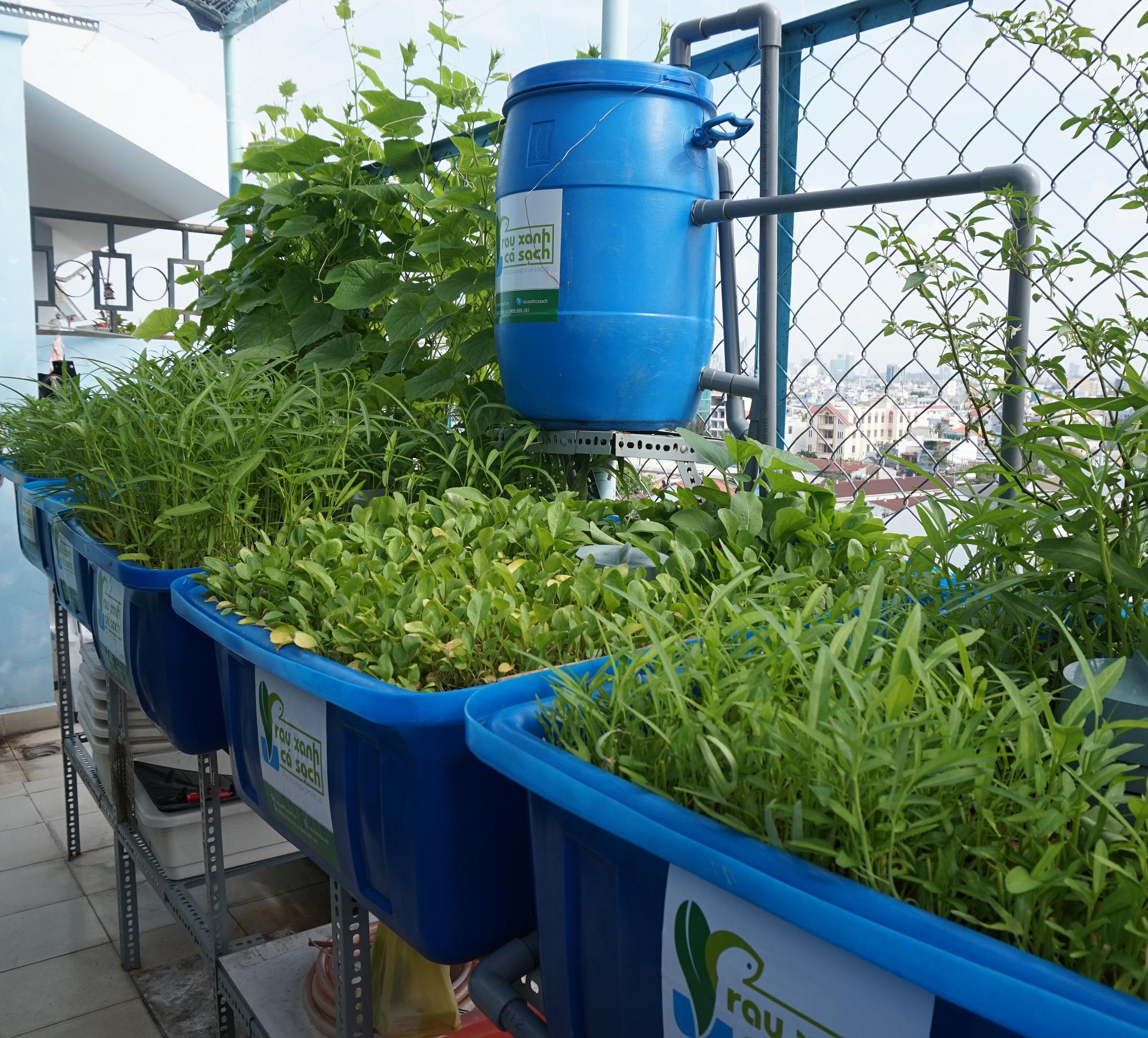 Giàn trồng rau sạch ban công