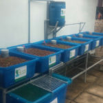 Hệ thống trồng rau sạch kết hợp nuôi cá tự đông – Aquaponics