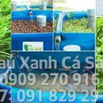 Hệ thống trồng rau xanh cá sạch – Aquaponics