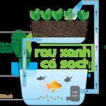 Mô hình trồng rau nuôi cá đang rất được thu hút