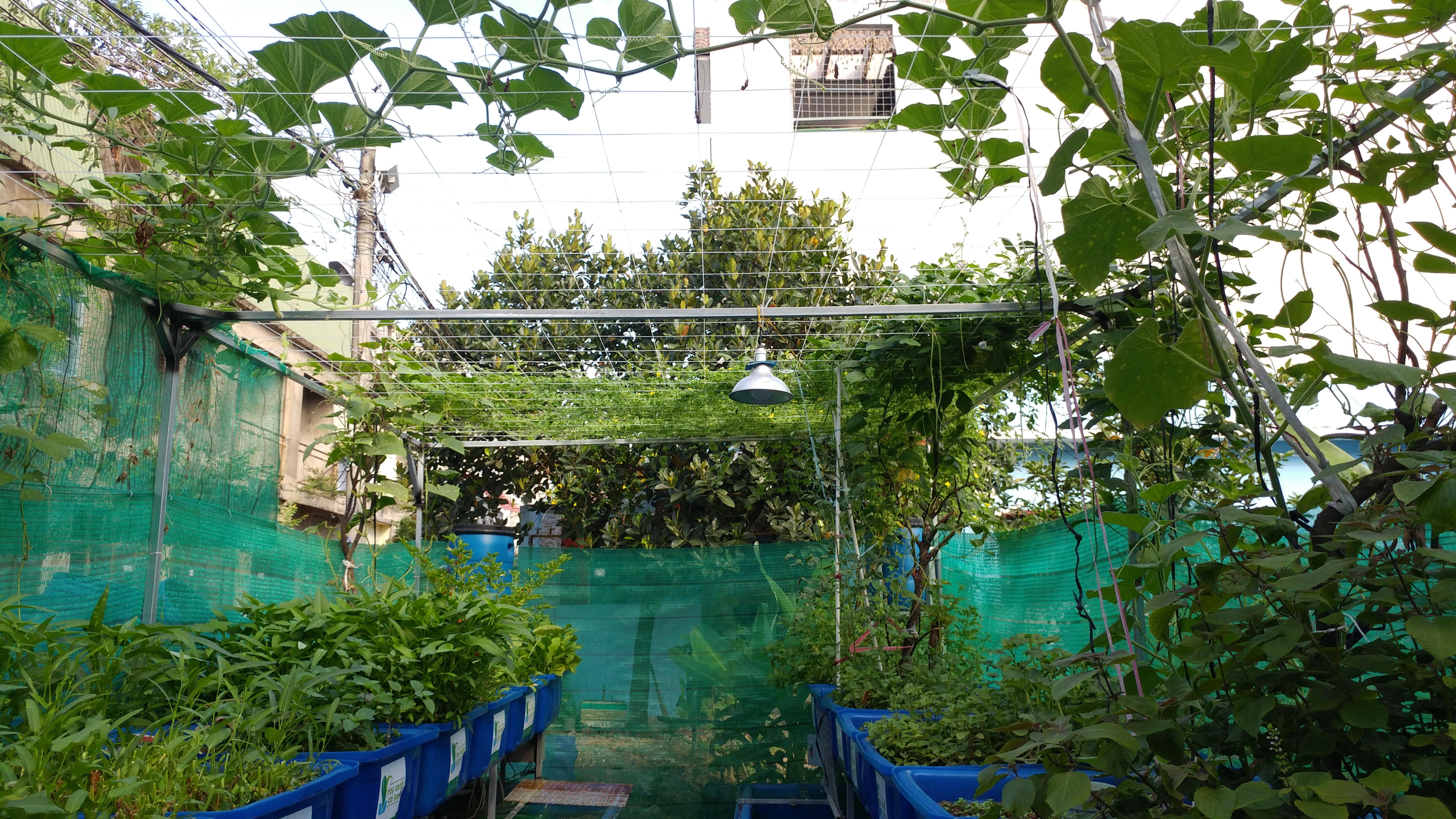 Toan-canh-mo-hinh-aquaponics-xanh