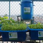 Hệ thống tự trồng rau nuôi cá hữu cơ tại nhà