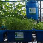 Tự xây dựng hệ thống rau xanh cá sạch tại nhà