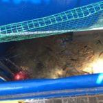 Bể cá trong hệ thống trồng rau nuôi cá tại nhà