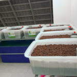 Hệ Rau Xanh Cá Sạch Aquaponics 7 Khay Rau 100L