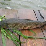 3 loại cá dưỡng sinh cho mùa thu