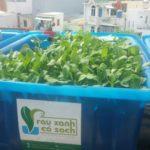 Thế nào là trồng rau an toàn tại nhà?