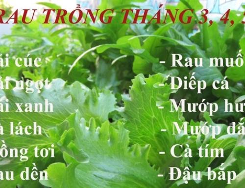 Các loại rau củ thích hợp trồng vào tháng 3 – 4 – 5