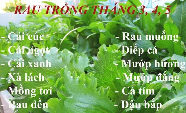 Các loại rau củ thích hợp trồng vào tháng 3 - 4 - 5