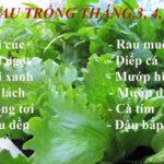 Các loại rau củ thích hợp trồng vào tháng 3, 4, 5