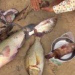 Sẽ ảnh hưởng gì khi ăn cá bị nhiễm độc