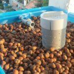 Các giá thể trồng cây tốt nhất của hệ Aquaponics