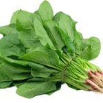 Cách trồng và chăm sóc rau chân vịt tại nhà