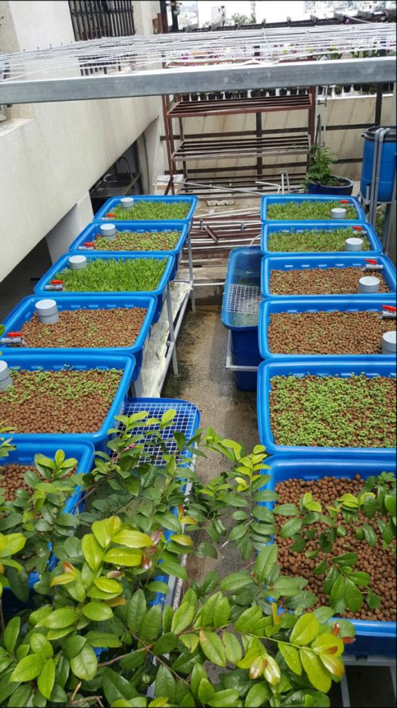Hệ thống khay trồng hỗ trợ sự phát triển của cây trồng tốt hơn và có liên kết chặt chẽ hơn là làm vườn đất truyền thống vì không cần phải xới đất thường xuyên.