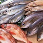Cách phân biệt cá bị nhiễm độc để đảm bảo sức khỏe cho gia đình
