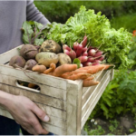 Làm thế nào để nhận biết rau an toàn?