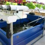 Tiềm năng áp dụng hệ thống Aquaponics ở Nepal
