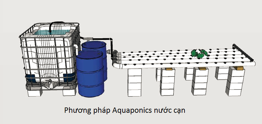 so-do-phuong-phap-aquaponics-nuoc-can-nft