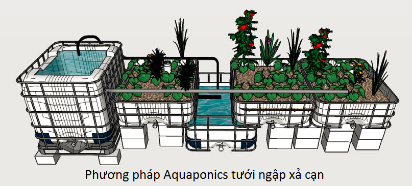 so-do-phuong-phap-aquaponics-tuoi-ngap-xa-can-mb