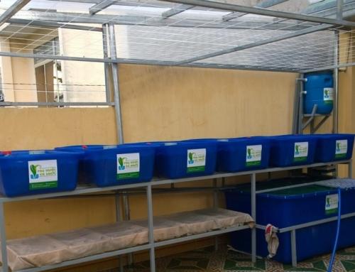 Hệ Aquaponics 6 Khay Rau 100L – Giá 21 triệu