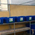 Hệ Rau Xanh Cá Sạch Aquaponics 6 Khay Rau 100L